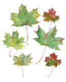 Ejemplo de la acuarela de hojas de arce en colores naturales stock de ilustración