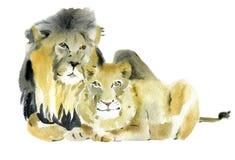 Ejemplo de la acuarela de un león y de una leona Imagen de archivo libre de regalías