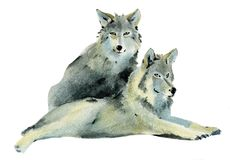 Ejemplo de la acuarela de un par de lobos Imagen de archivo