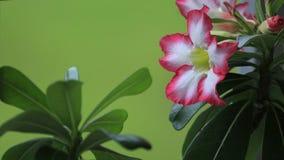 Ejemplo de la bandera de las plantas ornamentales Fotos de archivo libres de regalías