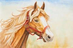 Ejemplo de la cabeza de caballo de la acuarela Fotografía de archivo