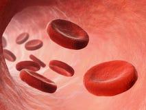 Ejemplo de la circulación sanguínea Foto de archivo
