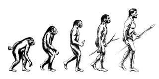 Ejemplo de la evolución humana Foto de archivo libre de regalías