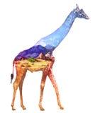 Ejemplo de la exposición doble de la jirafa Imagen de archivo