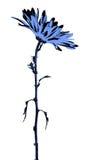 Ejemplo de la flor de la margarita Fotografía de archivo