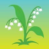 Ejemplo de la flor del lirio de los valles Foto de archivo libre de regalías