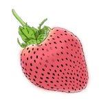 Ejemplo de la fresa fresca Imagen de archivo libre de regalías