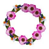 Ejemplo de la guirnalda con la rosa salvaje, manzanilla, sabio stock de ilustración