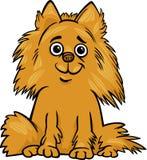 Ejemplo de la historieta del perro de Pomeranian Fotografía de archivo