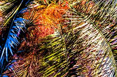 Ejemplo de la hoja de la palmera Imágenes de archivo libres de regalías