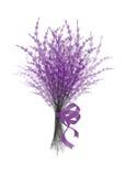 Ejemplo de la lavanda del ramo con la cinta festiva de la lila aislada en el fondo blanco Imagenes de archivo