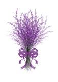 Ejemplo de la lavanda del ramo con la cinta festiva de la lila aislada en el fondo blanco Fotos de archivo libres de regalías