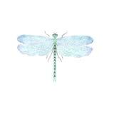 Ejemplo de la libélula de la acuarela en el fondo blanco Imágenes de archivo libres de regalías