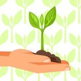 Ejemplo de la mano humana que celebra la pequeña planta verde Foto de archivo