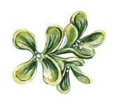 Ejemplo de la moda de la acuarela de un  h del brooÑ en color verde verde oliva libre illustration