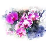 Ejemplo de la orquídea hermosa del flor Fotografía de archivo libre de regalías