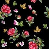 Ejemplo de la pintura de la acuarela de la rosa del rojo, modelo inconsútil Fotografía de archivo libre de regalías