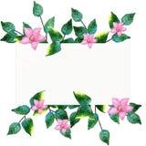 Ejemplo de la pintura de la mano de la acuarela de flores y de hojas del verde Imágenes de archivo libres de regalías