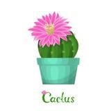 Ejemplo de la planta del cactus Imagen de archivo