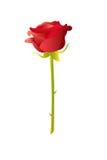 Ejemplo de la rosa del rojo Imágenes de archivo libres de regalías