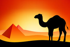 Ejemplo de la salida del sol de la puesta del sol de la naturaleza del paisaje de la silueta del camello de Egipto Imagen de archivo libre de regalías