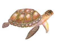 Ejemplo de la tortuga de mar con la acuarela Acuarela Foto de archivo
