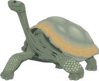 Ejemplo de la tortuga de las Islas Galápagos stock de ilustración