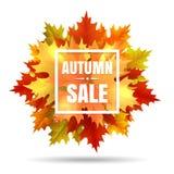 Ejemplo de la venta del otoño con caída de la hoja Foto de archivo libre de regalías