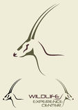 Ejemplo de los ciervos Imagen de archivo