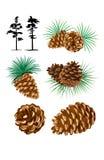 Ejemplo de los conos del pino ilustración del vector