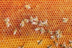 Ejemplo de los panales de la abeja Imagenes de archivo
