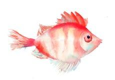 Ejemplo de los pescados Fotos de archivo libres de regalías