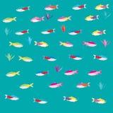 Ejemplo de los pescados de Tetras Fotos de archivo