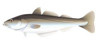 Ejemplo de los pescados de Pollock Stock de ilustración