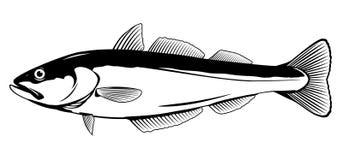 Ejemplo de los pescados de Pollock Libre Illustration
