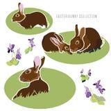 Ejemplo de Pascua con la flor y el conejo libre illustration