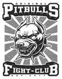 Ejemplo de Pitbull Fotos de archivo libres de regalías
