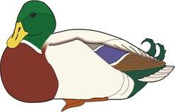 Ejemplo de reclinación del pato silvestre ilustración del vector