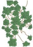 Ejemplo de Succulents, Aeonium decorativo del vector Imágenes de archivo libres de regalías