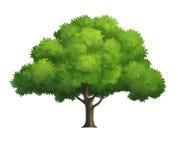 Ejemplo de un árbol Fotografía de archivo libre de regalías