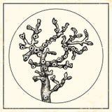 Ejemplo de un coral Imagen de archivo libre de regalías