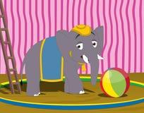 Elefante del circo Fotos de archivo