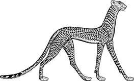 Ejemplo de un leopardo egipcio antiguo Fondo blanco ilustración del vector