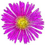 Ejemplo de una flor rosada con un modelo del tono medio stock de ilustración