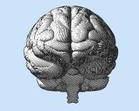 Ejemplo del cerebro del grabado en vista delantera sobre BG azul Foto de archivo