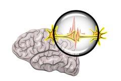 Ejemplo del cerebro y de las neuronas ilustración del vector