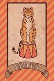 Ejemplo del circo del vintage, tigre Foto de archivo libre de regalías