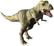 Ejemplo del dinosaurio de TRex del tiranosaurio aislado Fotografía de archivo libre de regalías