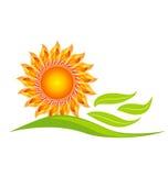 Ejemplo del diseño del girasol Imagen de archivo libre de regalías