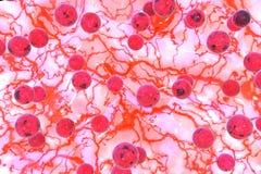 Ejemplo del estafilococo áureo 3D Fotos de archivo libres de regalías
